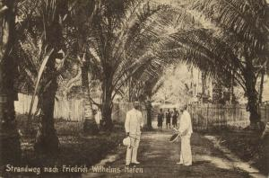 german new guinea, MADANG, Friedrich-Wilhelmshafen, Beach Road (1910s) Palm Tree