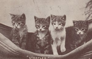 4 cats Startled , 1907