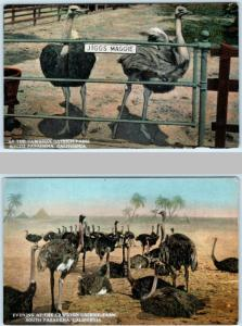 2 Postcards SOUTH PASADENA, CA~ Cawston OSTRICH FARM Jiggs & Maggie  ca 1910s