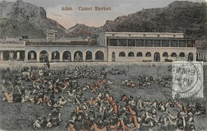 Vintage 1913 Postcard, Aden Camel Market, Yemen, Middle East, with stamp DB4