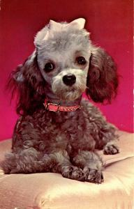 Dog -  Poodle (Silver)