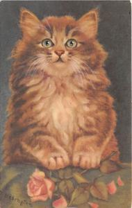 Cat Post Card Old Vintage Antique Fat Cat Unused