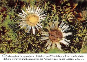 Flowers Fleurs Blumen Postcard Quote Petr. 3:II