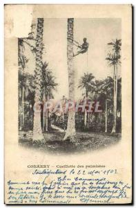 Old Postcard Conakry Guinea picking Palmistes