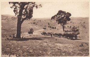 Australian Bullock Teams hauling wool to Market , Australia , 1910s
