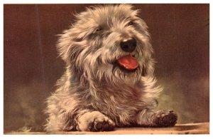 Dog   ,Puppy Love