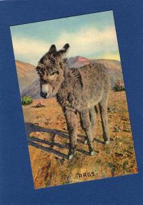 Donkey / Burro RAGS I Want My Mama Postcard