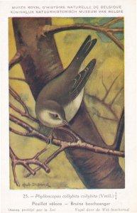 Common Chaffinch Phylloscopus Collybita WW2 Bird Rare Postcard