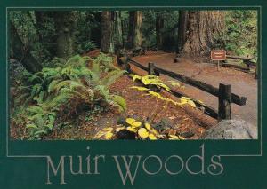 California Muir Woods Cathedral Grove In Muir Woods