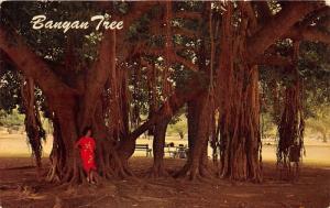 Lahaina? Hawaii~Lady Posing under Banyan Tree~Info on Back~1965 Postcard