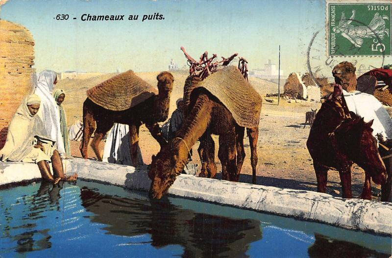 Tunisia Chameaux au Puits Camels Drinking Water Postcard