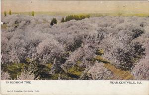 In Blossom Time, Near KENTVILLE, Nova Scotia, Canada, 1900-1910s