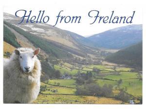 Hello from Ireland Sheep John Hinde Postcard 4X6