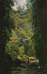 Martinique Ajoupa-Bouillon Falaise River Between High Rock Cliffs