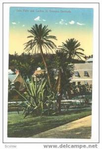 Date Palm and Cactus, St Georges, Bermuda 00-10s