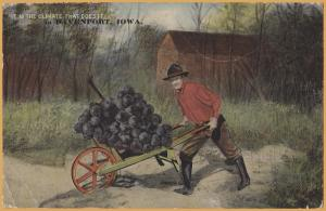 Davenport, Iowa, Exaggerated Fruit, Giant Grapes It is the climate... 1912