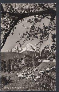 Germany Postcard - Fruhling im Berchtesgadener Land  DC2335