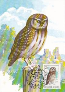 Birds Owls Hungary Stamps On Postcards
