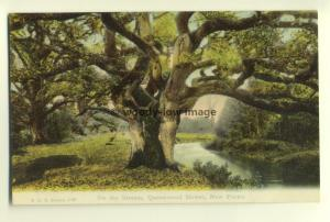 tp5919 - Hants - Stream, Queenwood Bower, New Forest - Postcard FGO Stuart 1123