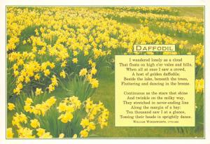 Postcard Wordsworth Daffodils Peom, I Wondered lonely as a cloud C13