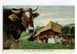 264676 Gruss aus SWITZERLAND Cow House Vintage EMBOSSED PC