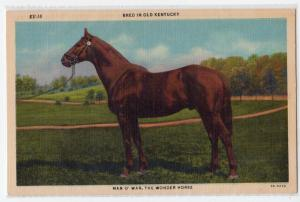Man O' War the Wonder Horse