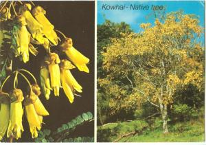 New Zealand, KOWHAI, Native Tree, 1977 used Postcard