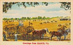 HAGUE  VIRGINIA~1951 POSTMARK GREETINGS FROM POSTCARD