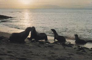 GALAPAGOS - Ecuador , 50-70s ; Sea Lions