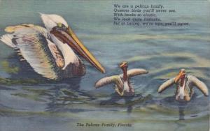 The Pelican Family Florida
