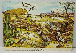 Desert Wildlife Vulture Bobcat Vintage Postcard