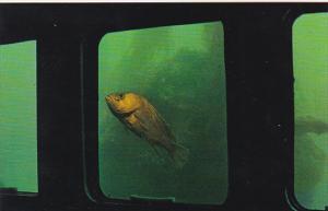 Canada British Columbia Vancouver Island Rock Fish Undersea Gardens
