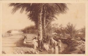 Algeria Oasis de Biskra Le jardin Landon