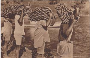 Men carrying Bananas , Fiji , 00-10s ; TUCK