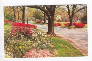 Columbia's Garden Trail in Spring w/ Flowers, Columbia,SC 1950-70s - South Ca...
