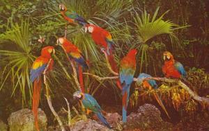 Florida Birds Parrots In Parrot Jungle Miami Florida
