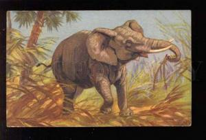 039118 Hungy African ELEPHANT. By E.B. vintage PC
