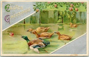 1913 Winsch EASTER GREETINGS Embossed Postcard Ducks Racing for Apple in Water