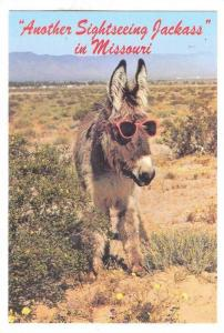 Another Sightseeing Jackass in Missouri, Donkey with plastic sunglasses on,...