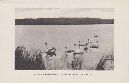 New Jersey Point Pleasant Beach Swans On The Lake