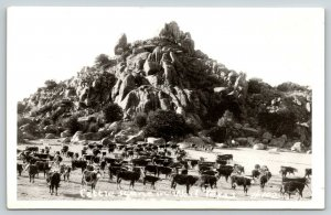 West Texas~Cattle Scene~White Face Herd by Rock Formation~No Cowboys~1930s RPPC