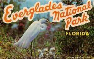 Folder - Everglades National Park, FL          12 views