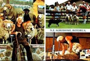New Zealand Rotorua Riverdale Park Agrodome