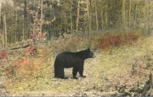 RPPC Animal Bear, Pulished in Milwaukee WI, Wisconsin - Hand-colored