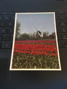 Vintage Postcard; Springtime in Holland, Windmill Tulips