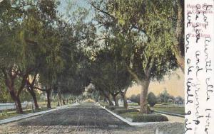 California Pasadena Marengo Drive Pepper Trees