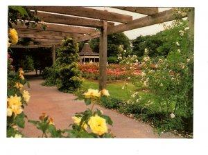Royal Botanical Gardens, Rose Garden, Hamilton, Ontario Large 5X7 Postcard