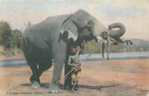 Ceylon Boy and elephant antique vintage Postcard