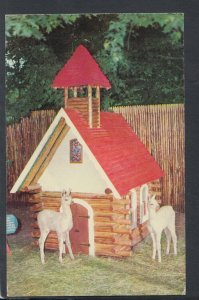 America Postcard - Baby Llamas, Wild Animal Nursery, Catskill Game Farm RS20052