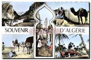 Old Postcard Remembrance of Algeria Camel